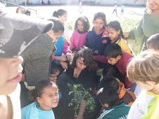 Plantando Moringa na escola.