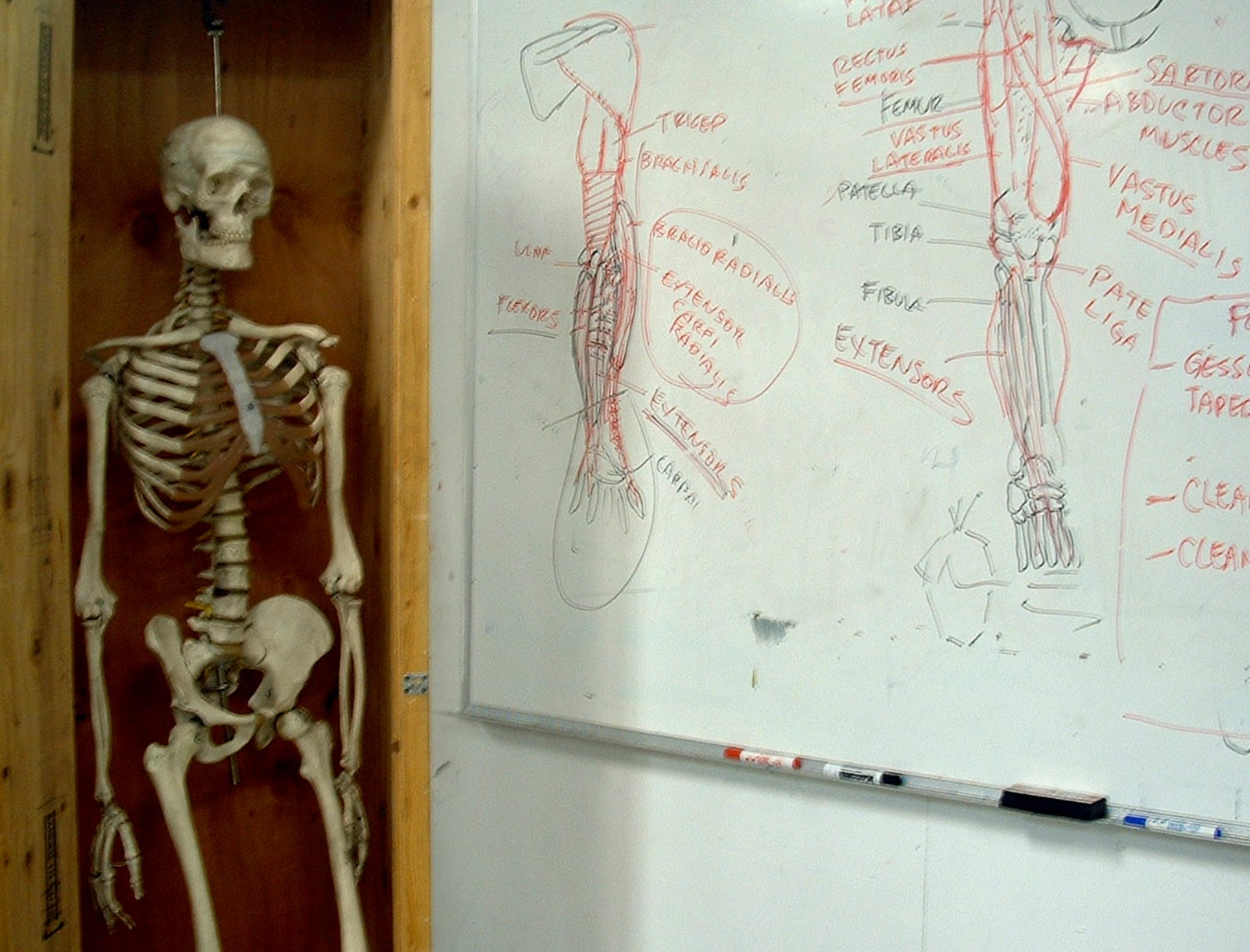 Anatomy classes nyc 9857786 - follow4more.info