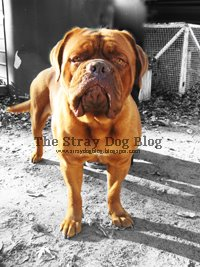 The Stray Dog Blog