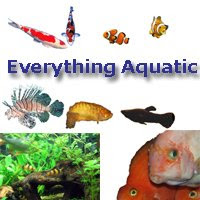 Everything Aquatic aquarium forum