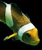 Aquarium ich treatment for Freshwater fish parasite identification