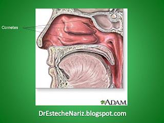 nasalanatomy FUNCIÓN NASAL | Parte 3 | Rinoplastia | Nasen OP | Rhinoplasty | ¿Cuáles son las funciones de la Nariz? | Nose functions
