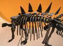 Туоянгозавър Tuojiangosaurus!!!
