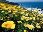 Калифорния!!!