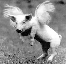 angel pig