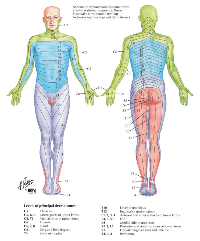 A dermatome map is shown in