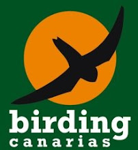 www.birdingcanarias.com