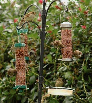 Birding canarias c mo atraer fauna a tu huerta o jard n for Bebederos para aves jardin