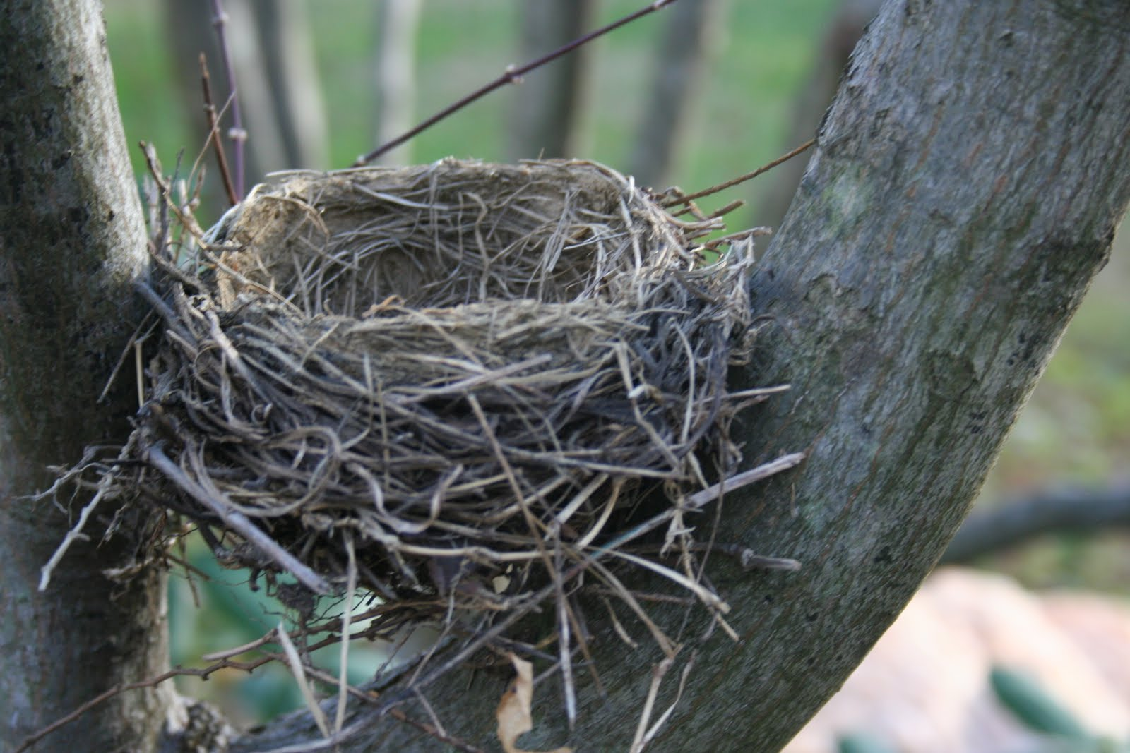 Delco Daily Top Ten: Top 10 The Bird Nest