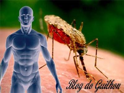 Em Caso De Suspeita De Dengue O Que Tomar