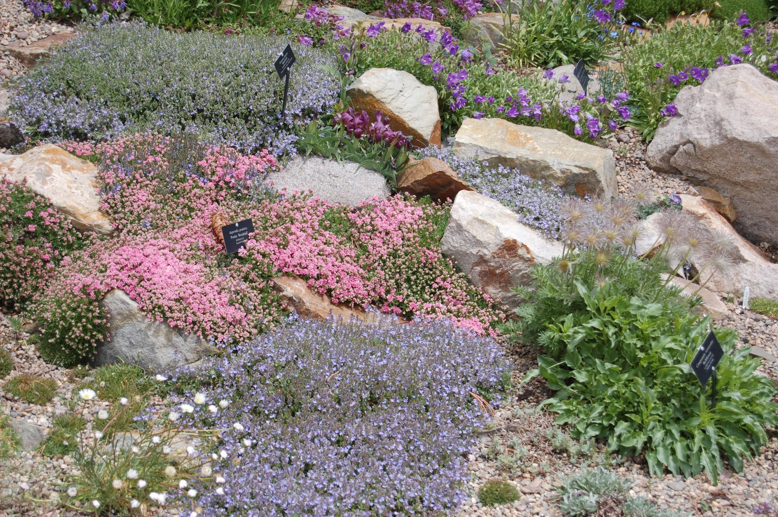 jo jones traveling lady betty ford alpine garden. Cars Review. Best American Auto & Cars Review