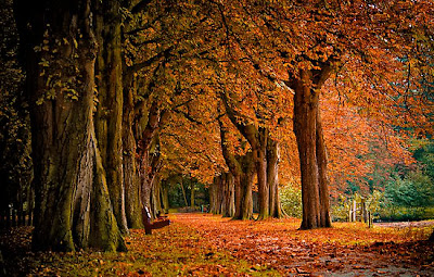 Jesienna samotność