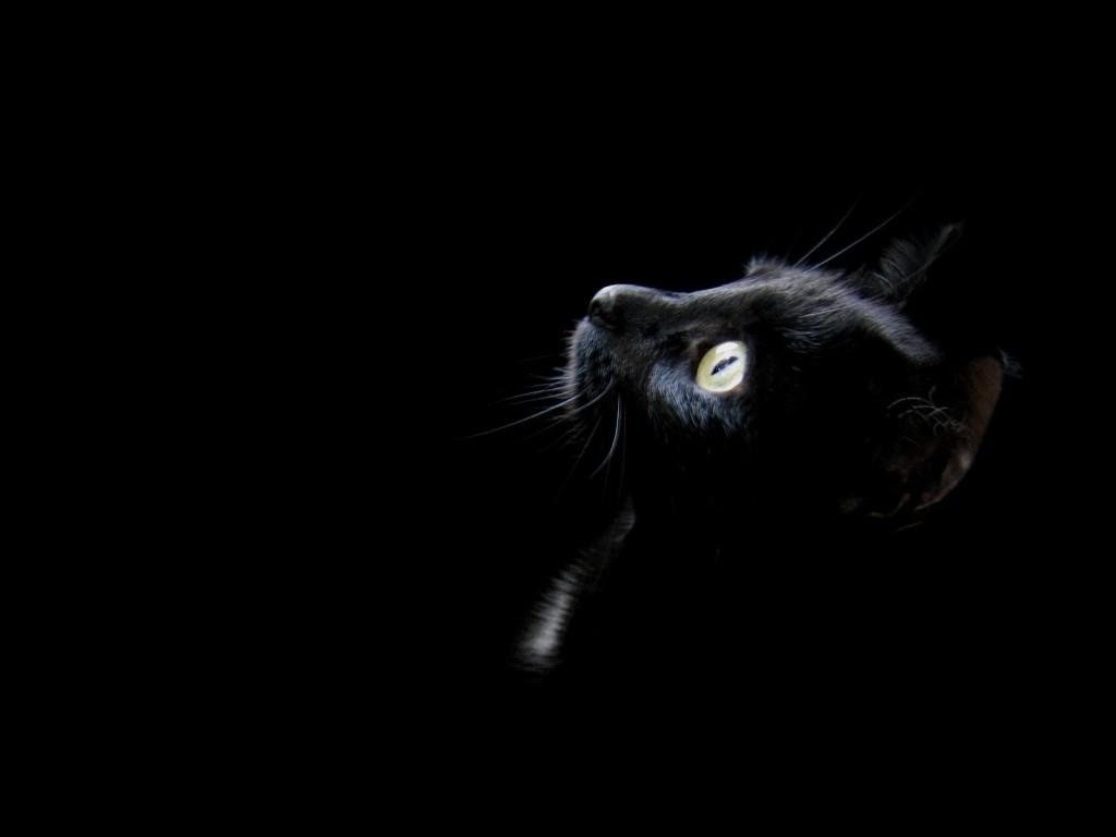 http://1.bp.blogspot.com/_q0u_M4-1ur0/TA1uuM5RkGI/AAAAAAAAALg/dhG5ChckQ_U/s1600/black+cat.jpg