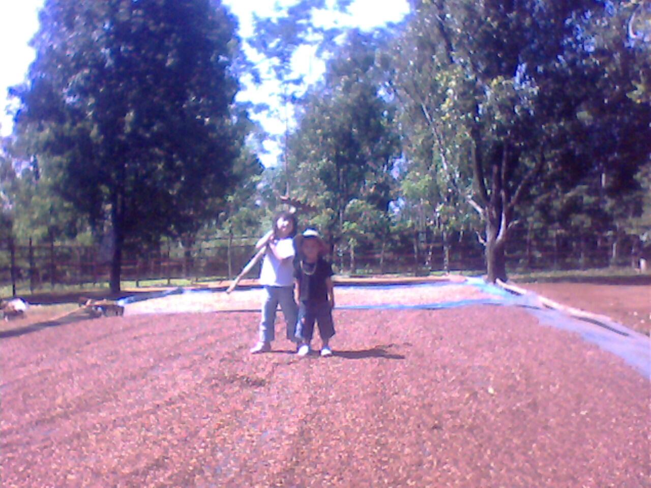 Kebun di jonggol
