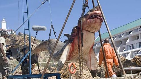 Fotos de la muerte de el cazador de cocodrilos 14