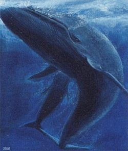 [ballena-azul.jpg]