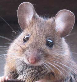 Longest Thread Ever! - Page 21 Mouse
