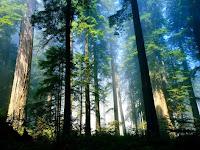 ruyada orman gormek ne demek