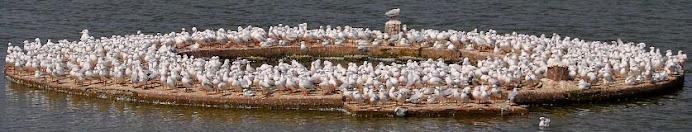 Jamnagar Birds