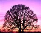El árbol de la vida...