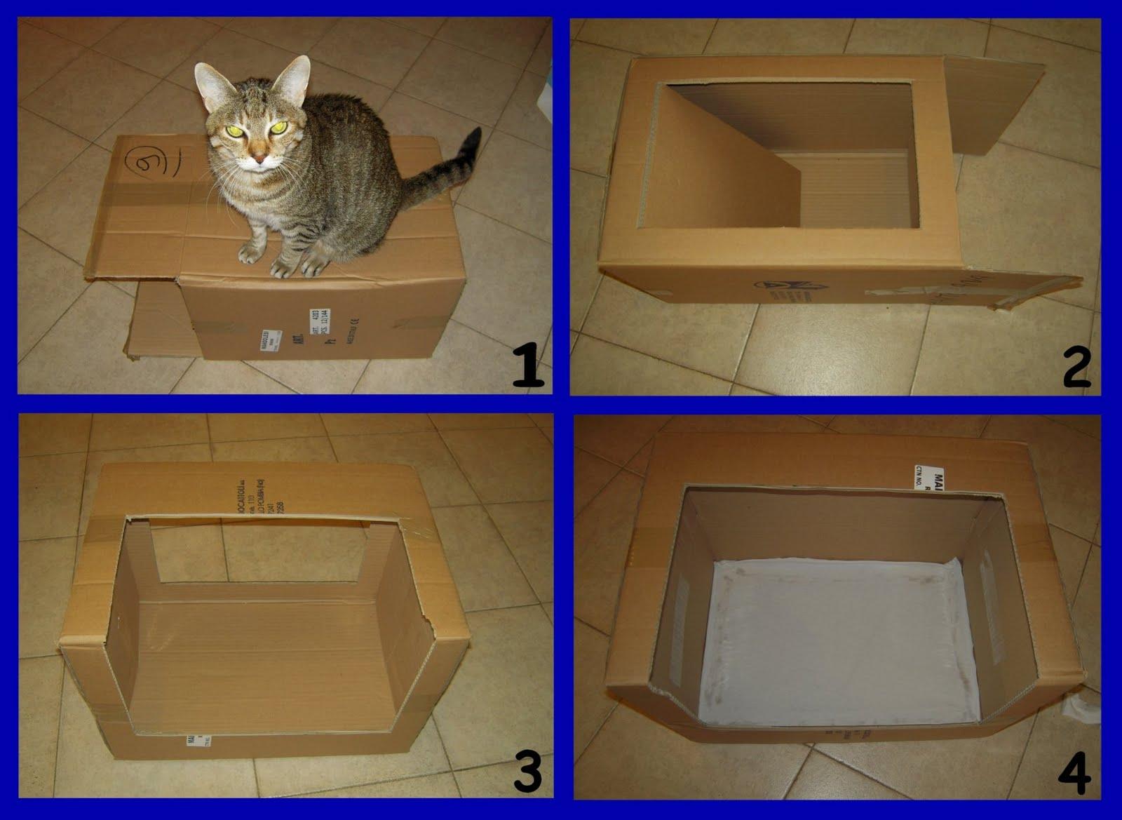 Casette di cartone per gatti qz73 regardsdefemmes - Costruire un case ...