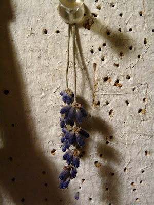 Lavender flowers dried hanging on corkboard