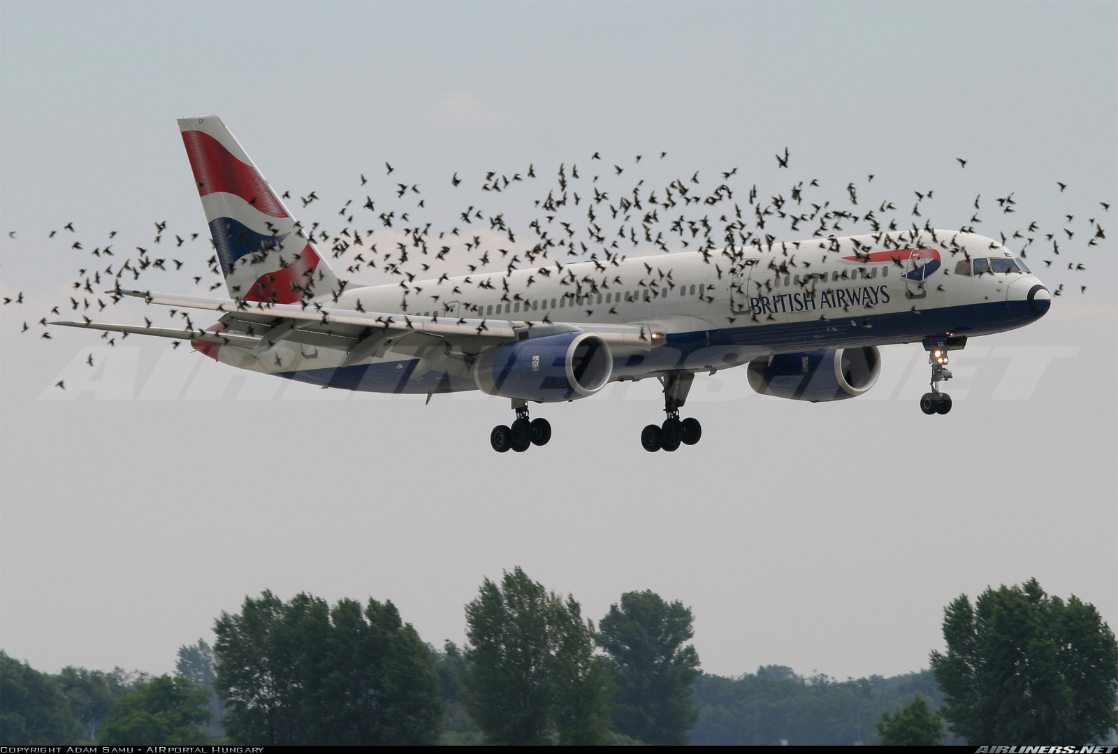 Bird Strike Plane Crashes ~ Bomba Wallpaper