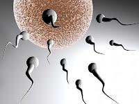 Hai, Saya Sperma!