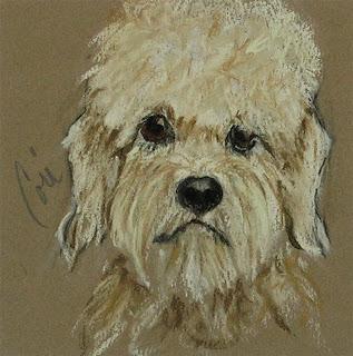 Dandie - Dandie Dinmont Terrier By Cori Solomon