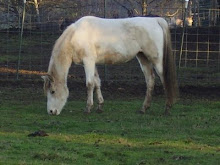 One of the Rescued Horses