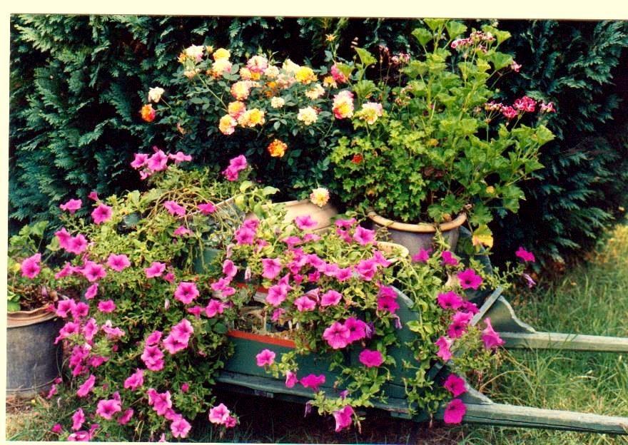 bienvenue dans mon jardin a fill sur sarthe promesse de fleurs en brouettes. Black Bedroom Furniture Sets. Home Design Ideas