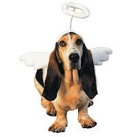 funny dog chrsitmas wallpapers free