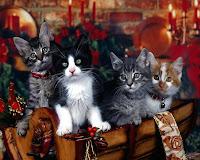 Little Cat Wallpapers