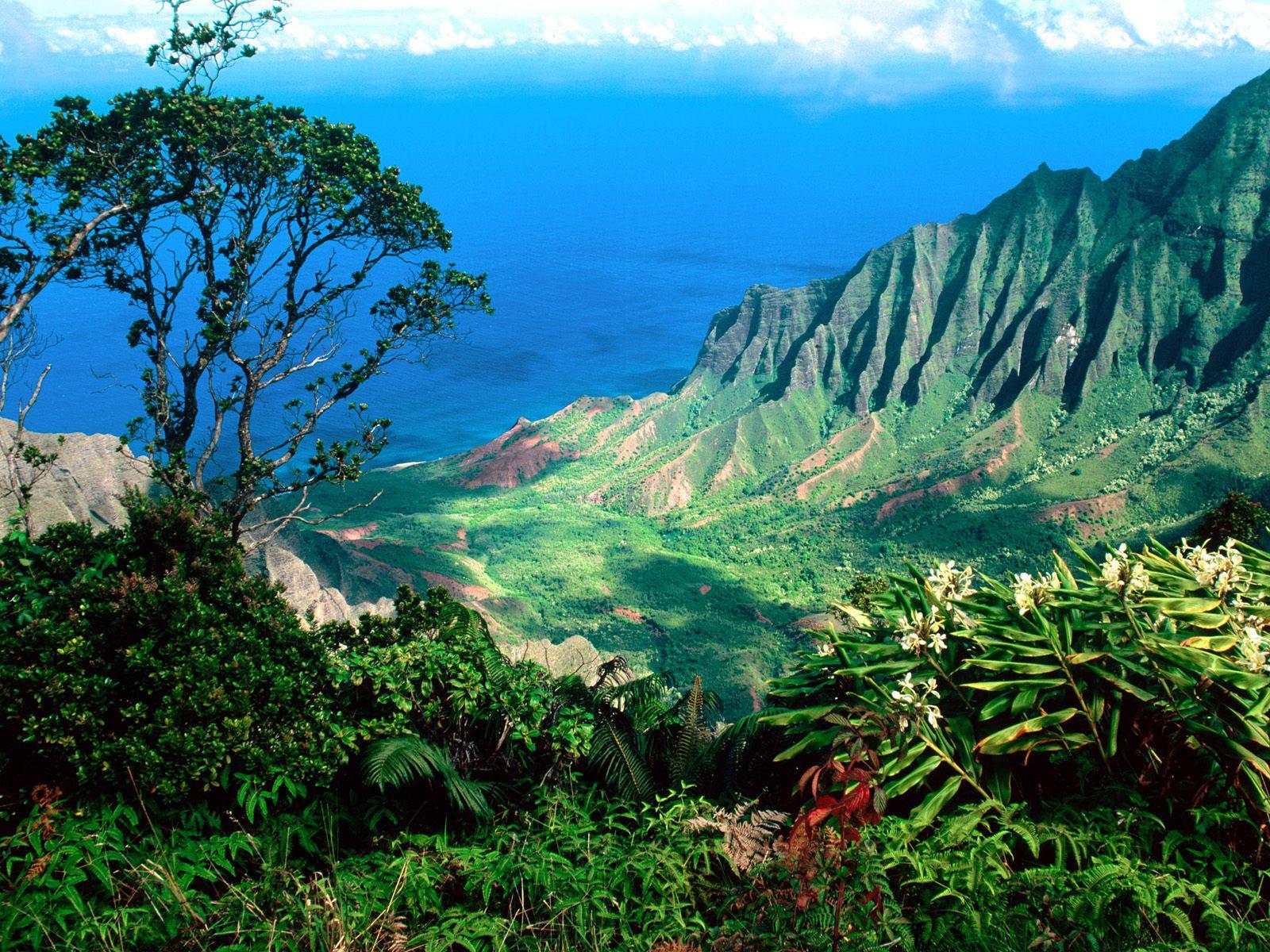 Hawaii Trip-February 2011