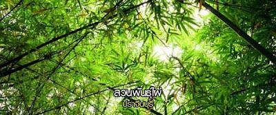 Bamboo garden