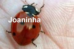 Mimo da Joaninha