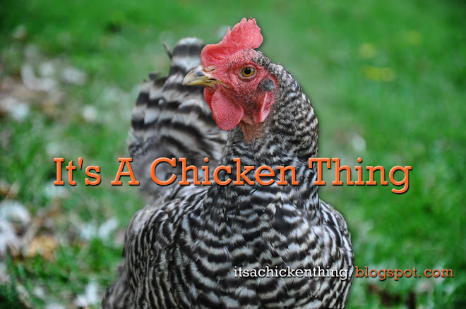It's a Chicken Thing