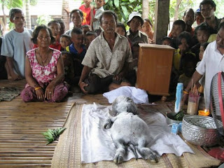 2 Makhluk Aneh Di Temukan di Pedalaman Hutan Thailand