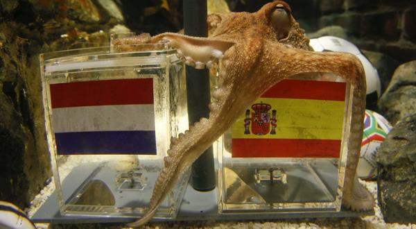 http://1.bp.blogspot.com/_qGbWdzkhB-s/TD9E1AyzmcI/AAAAAAAAFq8/Eis686zSzEI/s1600/Paul+Octopus.jpg