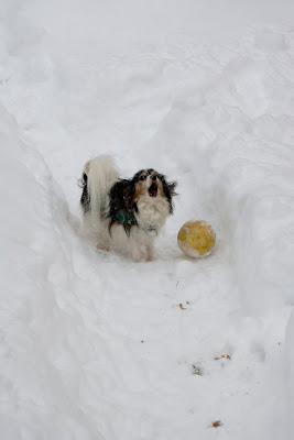Didi says, 'Throw my ball, Daddi!'