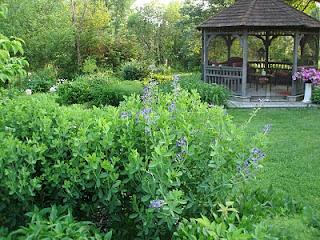 Jennie's Garden