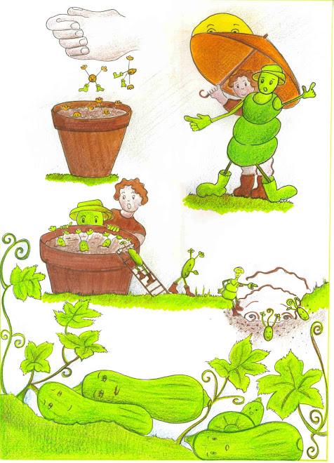vie d'une graine de courgette