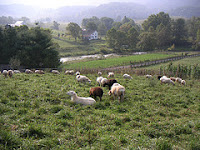 sheep farm in Scott County, VA
