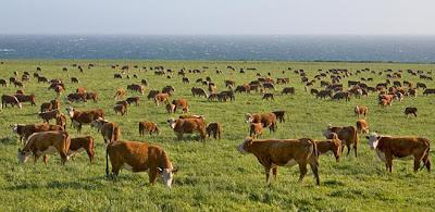 http://1.bp.blogspot.com/_qLAIskTQXUc/TTg81yXGprI/AAAAAAAAF-c/I6w80RMCkqI/s1600/Cattle_5473.jpg