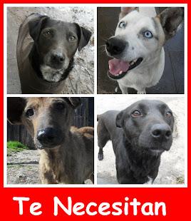 Muchos perritos están esperando su oportunidad