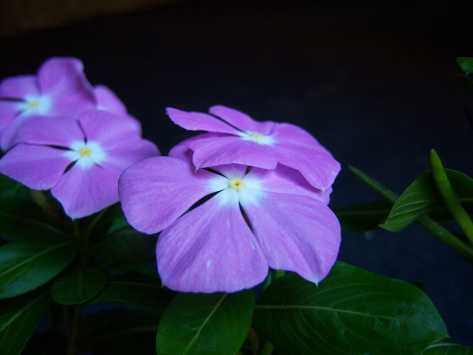 Plantar en macetas y jardineras tanto de interior como de exterior