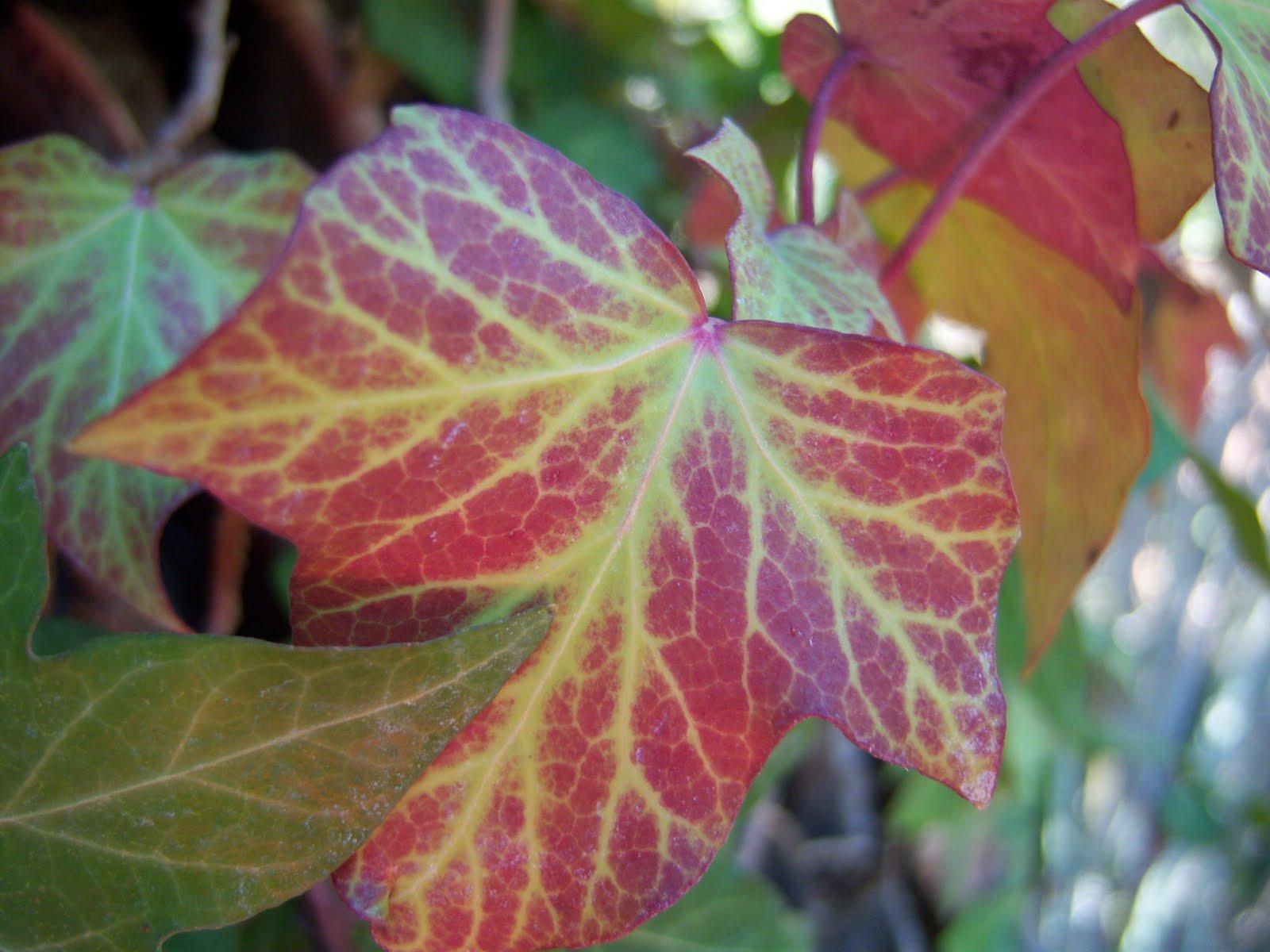 El color del invierno - BOTÀNIC SERRAT