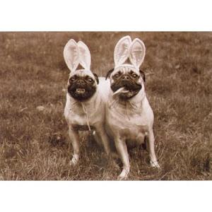 Pug Buns