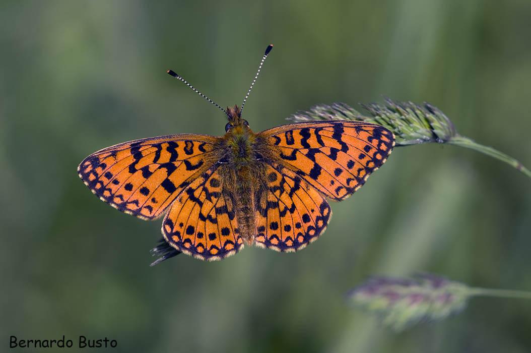 R a de la villa a mariposas for Villas las mariposas