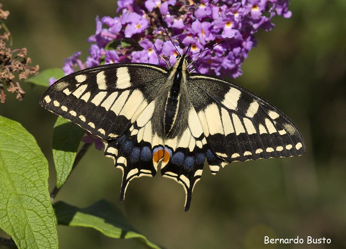 R a de la villa insistiendo con las mariposas for Villas las mariposas